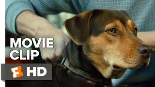 Download A Dog's Way Home Movie Clip - Go Home (2019)   Movieclips Coming Soon Video