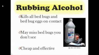 Download How to Get Rid of Bed Bugs Video