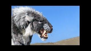 Download 絶滅してよかったと思う、怖い動物18選 Video
