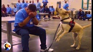 Download Dogs in Prison Train To Be PTSD Service Animals | The Dodo Video
