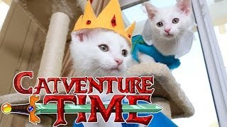 Download Adventure Time (Cute Kitten Edition) Video