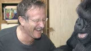 Download Koko's Tribute to Robin Williams Video
