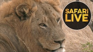 Download safariLIVE - Sunrise Safari - July 8, 2018 (Part 2) Video
