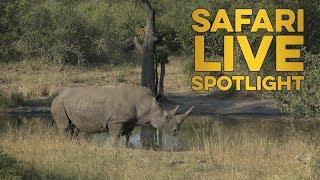 Download Celebrating World Rhino Day 2019 Video
