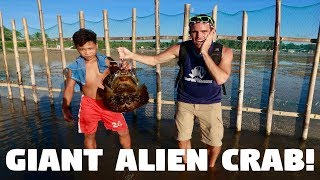 Download GIANT STRANGE ALIEN CRABS IN THE PHILIPPINES! (Scary Horseshoe Crabs) Video