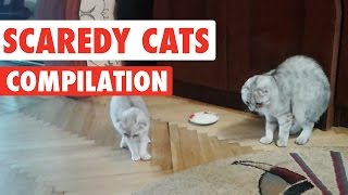 Download Scaredy Cats Video Compilation 2016 Video
