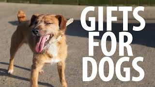 Download Giving Gifts to Homeless Dogs Video