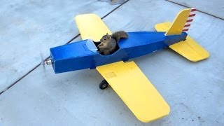 Download Squirrel Steals Airplane Video