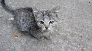 Download Someone abandoned two kittens and brought them to my yard Video