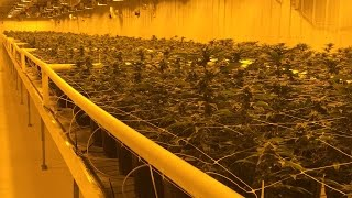 Download Take a tour of the Aurora Cannabis production facility (in 4K) Video
