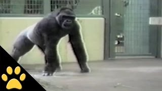 Download Monkeys Are Awesome: Compilation Video