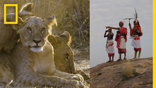 Download These Warriors Once Hunted Lions—Now They Protect Them | National Geographic Video