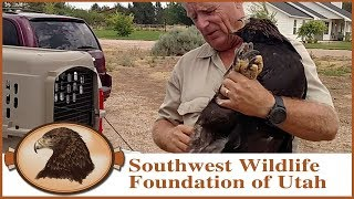Download The Six Golden Eagles Who Came to Dinner Video