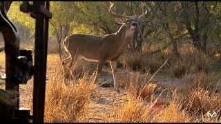 Download Extreme Close-Up Shot At Monster Whitetail Video