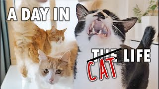 Download A day in the life of our cats Video