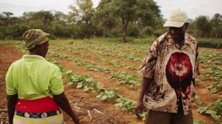 Download Conservation Agriculture: Islands of hope Video