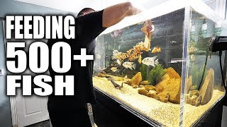 Download FEEDING 500+ FISH!!! | The King of DIY Video