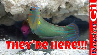 Download Phase I Fish Are Here: Saltwater Aquarium Video