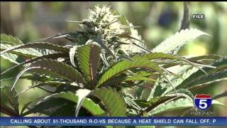Download Illegal cannabis cultivation site shut down in Siskiyou Co. Video