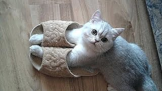 Download Best Funny cat and kitten - TOP Funniest cats in the world videos Compilation 2016 Video