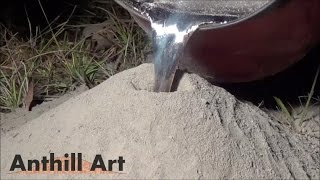 Download Casting a Fire Ant Colony with Molten Aluminum (Cast #043) Video