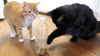 Download 5 Life Hacks Fur Cat Owners Video