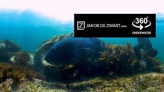 Download 360 vr underwater in 4k - Shelly beach, Manly Australia Video