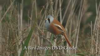 Download Birdwatching at RSPB Titchwell Marsh Video