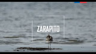 Download Cap 4. Zarapito Video