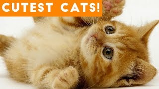 Download Ultimate Cute and Funny Cat Compilation 2018 | Funny Pet Videos Video