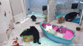 Download Iris gets poofy and stays that way - TinyKittens Video