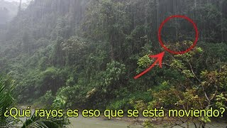 Download NO Creerás lo que Encontraron Dentro de esta Selva Video