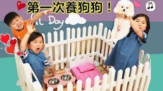Download 第一次養狗狗寵物!博美狗狗好可愛喔~ 寵物玩具淘寶開箱 Puppy Pomeranian Breeding Dog(Toys Opening)! Video
