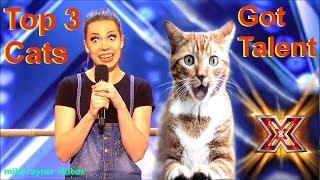 Download Savitsky Cats Got Talent Auditions! Amazing Cat Talent! Best Top 3 Funny Cute Animals! AGT 2018 Video