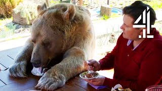 Download Breakfast With Your Pet Bear | Bear About The House: Me & My Supersized Pet Video
