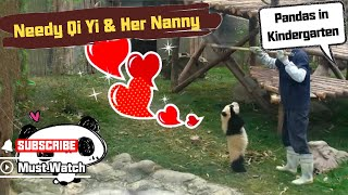 Download 【Panda Top3】Working or me? Needy Qi Yi strives for nanny's favor. Video