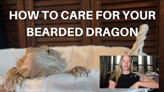 Download HOW TO CARE FOR YOUR BEARDED DRAGON! | A BEGINNERS GUIDE Video