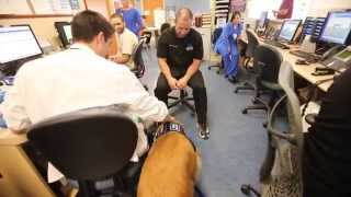 Download Compass the Therapy Dog Helps Young Child With Speech Therapy Video