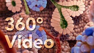 Download 360° Endocrine Cells Animation (demo) Video