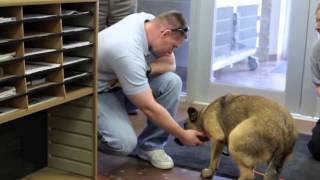 Download Lost Dog Dora reunited with family after seven months! Video