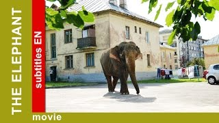 Download The Elephant. Russian Movie. Adventure. Comedy. English Subtitles. The Rock Films. StarMediaEN Video
