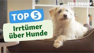 Download Top 5 Irrtümer über Hunde Video