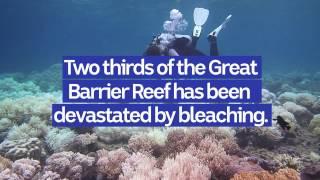 Download HACK: Great Barrier Reef has been devastated by bleaching Video
