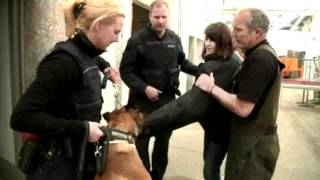 Download Polizeihunde im Einsatz Video