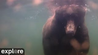 Download Underwater Bear Cam - Katmai National Park, Alaska powered by EXPLORE.org Video