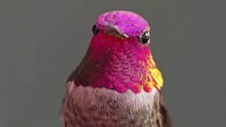Download The Hummingbird Whisperer Video