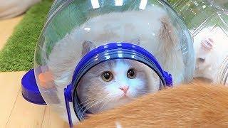 Download 고양이를 단체로 납치하는 방법 Video