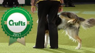 Download Oh Dear! Crufts 2017 Fails and Bloopers! Video