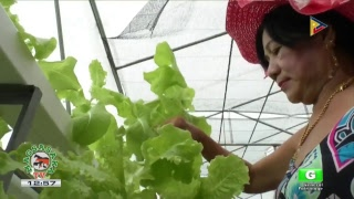 Download Mga bagong kaalaman sa larangan ng agrikultura hatid ng Magsasaka TV Video