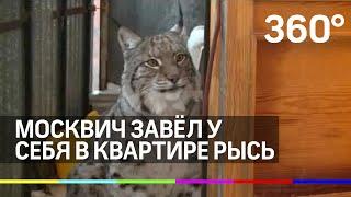 Download Москвич завел у себя в квартире рысь Video